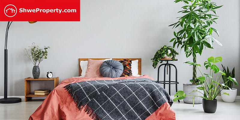 ပိုမိုကောင်းမွန်စွာ အိပ်ပျော်စေမယ့် အိပ်ခန်းတွင်း စိုက်သင့်သည့် အပင်များ